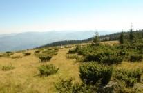 Muntele Mare 4