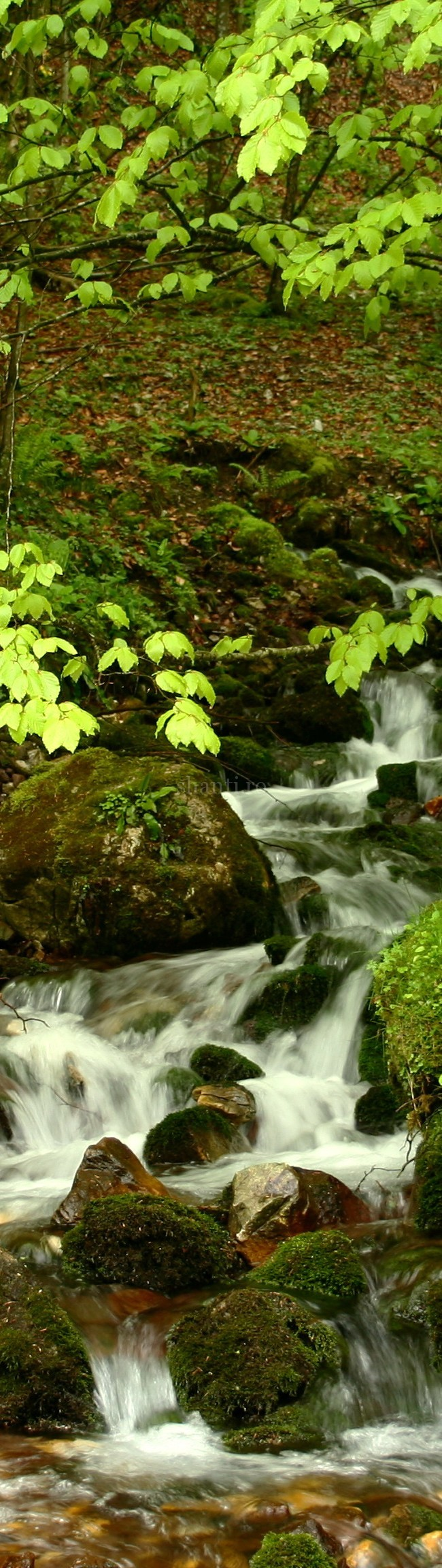 Valea Sighiştelului 3
