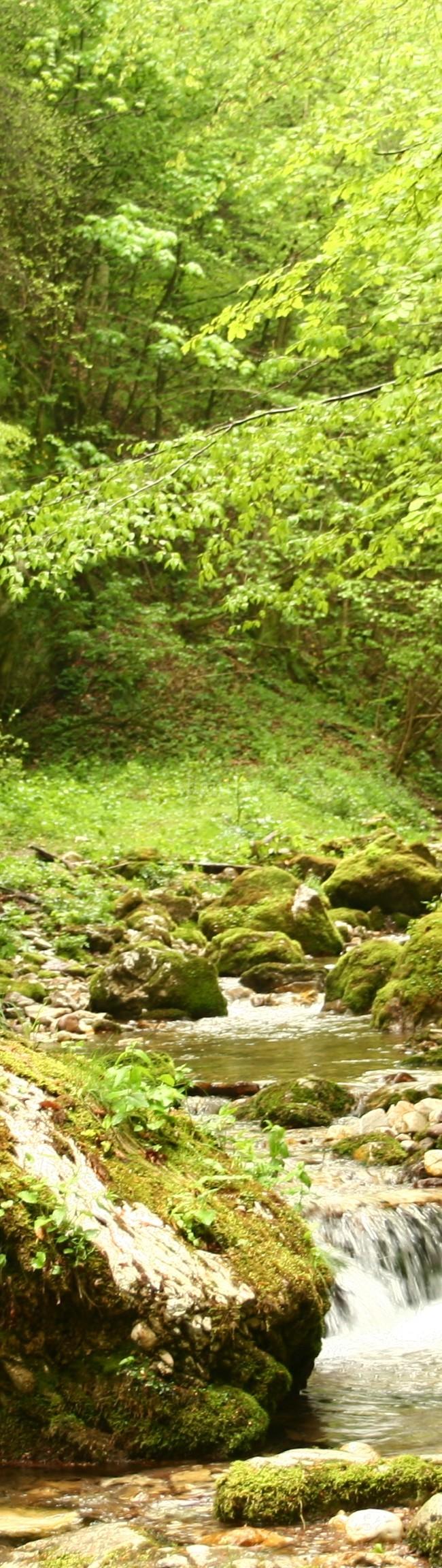 Valea Sighiştelului 2