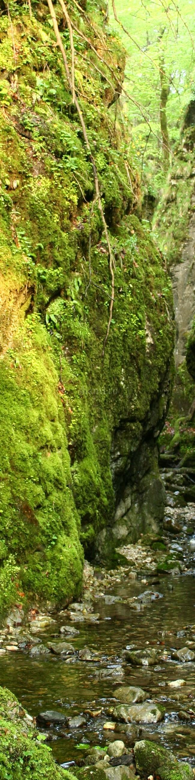 Valea Sighiştelului 1