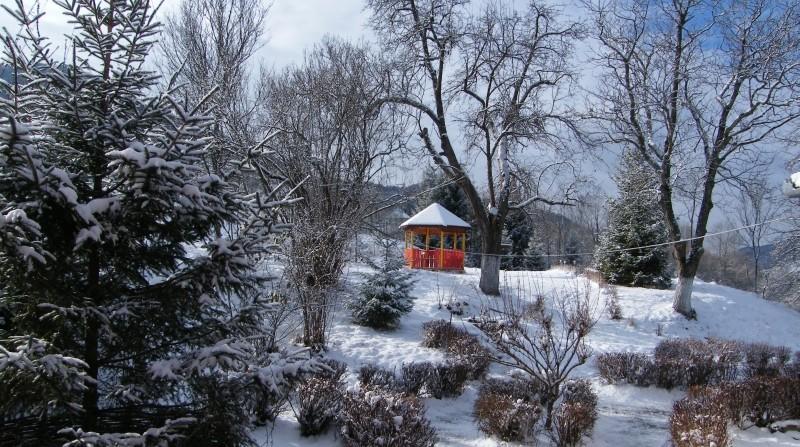 Shanti iarna  foisor 1