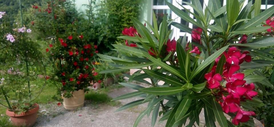 Flori tropicale la intrare