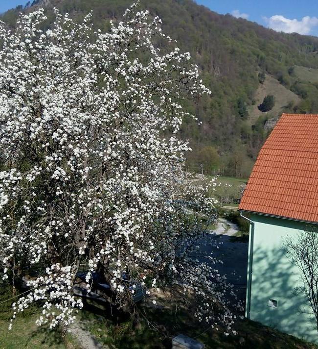 1 Mai 2015 la Shanti in Apuseni