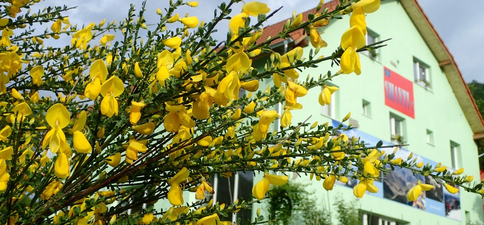 Shanti flowers path